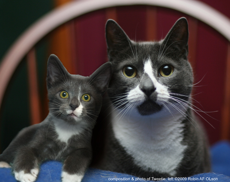 Sockington and Tweetie_CROP FRAME_B copy 2.jpg