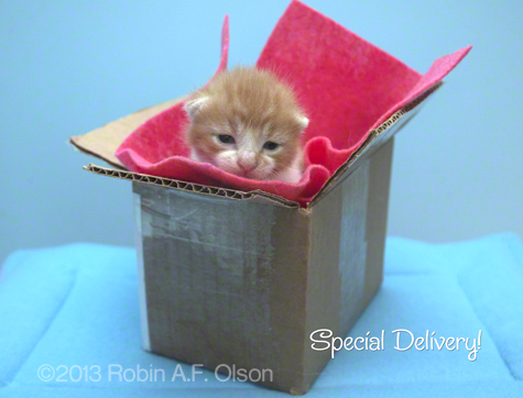 Special Delivery R Olson .jpg
