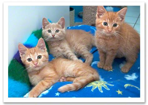 Three happy kittens r olson copy.jpg