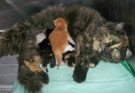 Tortie when newborn.jpg