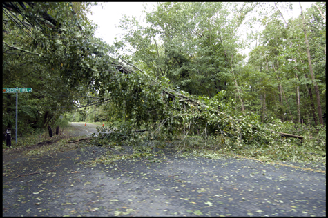 Tree down on Rte 34.jpg