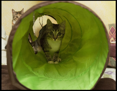 Tunnel Tabby copy.jpg
