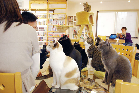 cafe-of-cats.jpg