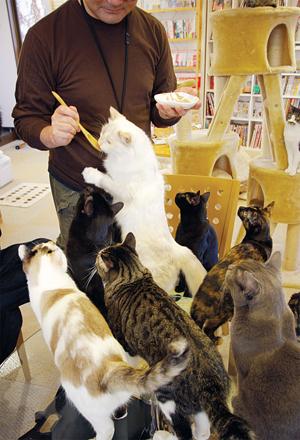 cats-feeding.jpg