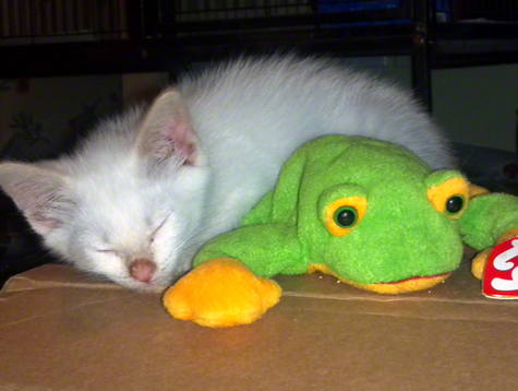 coco sleeping with frog.jpg