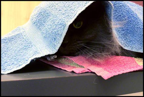 hiding.jpg