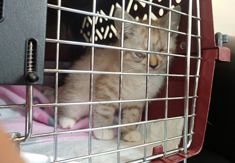 In cat carrier blood test vet run