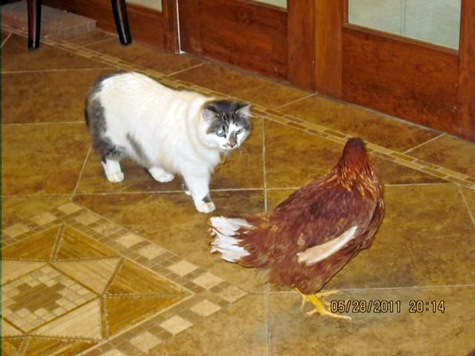 jaz and chicken close.jpg