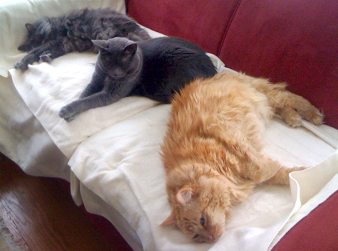 kitties on electric blanket copy.jpg