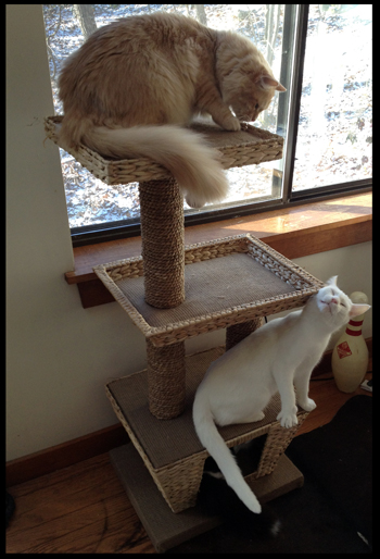 new cat tree.jpg