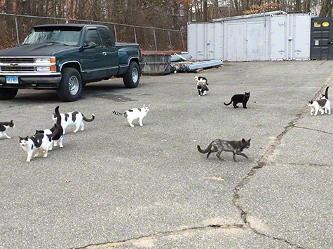 Parking lot with cats