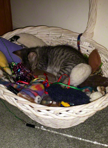 sleeping in the basket db.jpg